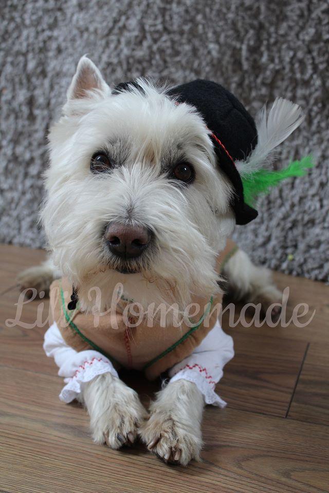 kostium góralski dla psa